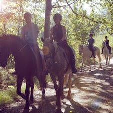 Cavaliers en forêt à Chevreuse